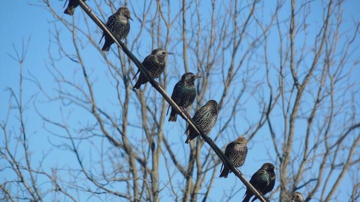 В Москву после зимовки возвращаются перелетные птицы