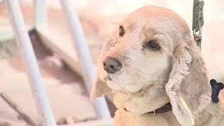 В Омске водитель отказался взять в маршрутку пассажира с собакой