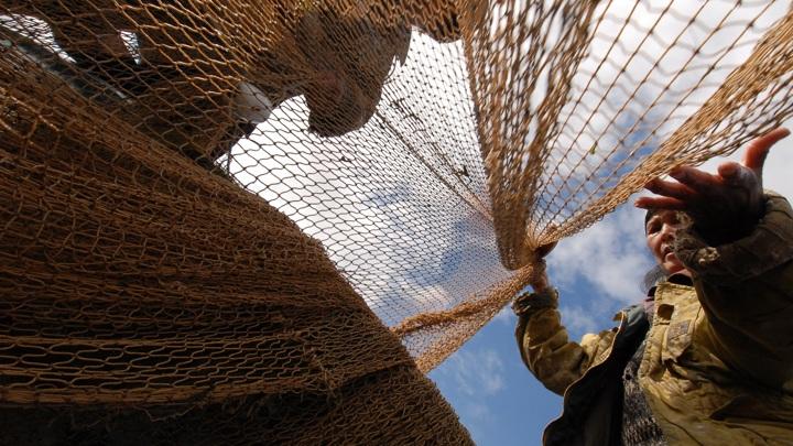 Трутнев: Россия сможет к 2023 году перерабатывать все выловленную в стране рыбу