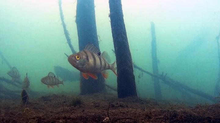 Владимирский рыболов снимает паводок из-под воды