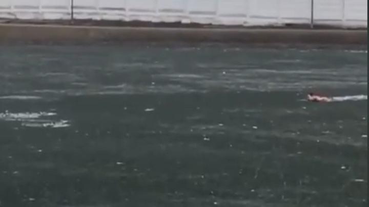 Мужчина утонул в московском парке, спасая собаку