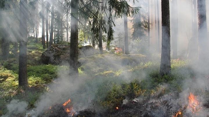 С 15 апреля в Ярославской области начнется пожароопасный сезон