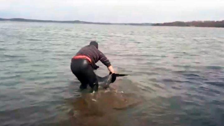 Жители Приморья спасли дельфина, застрявшего на мелководье