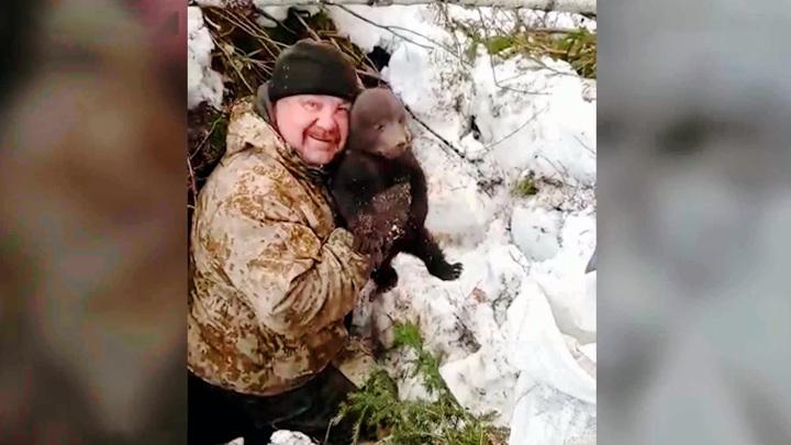 Костромские лесозаготовители спасли трех брошенных в берлоге медвежат