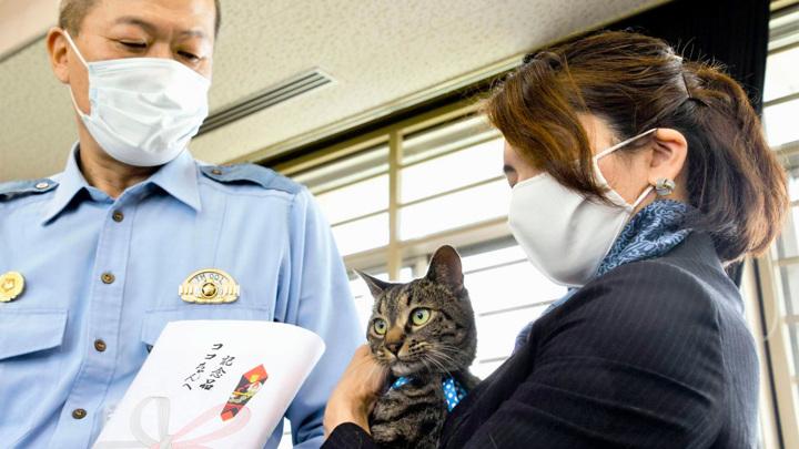 В Японии кошку, спасшую человека, назначили полицмейстером