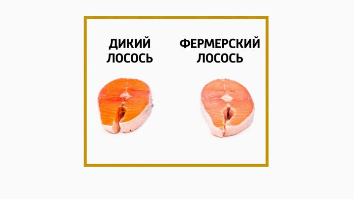 """Кадр из программы """"Доктор Мясников"""". Омега-3 поможет в борьбе с последствиями коронавируса"""