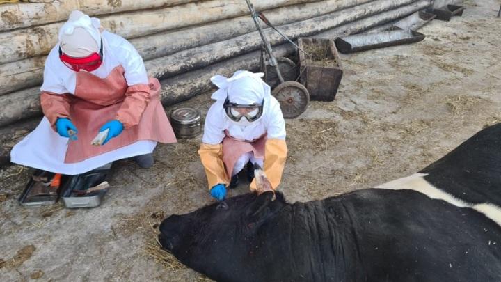 Агентство ветеринарии Ульяновской области