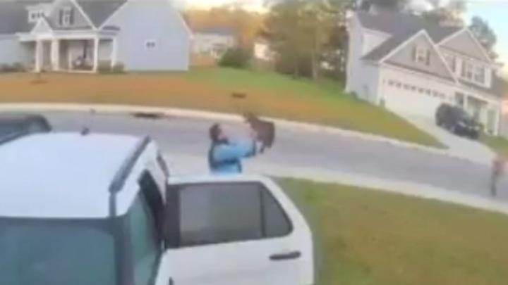Нападение бешеной рыси на семейную пару попало на видео