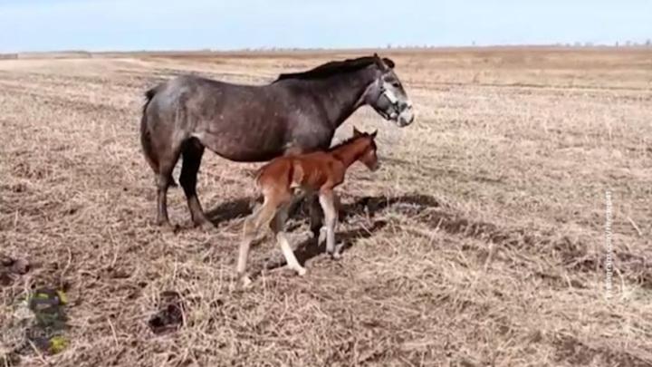 Амурские спасатели достали из канавы только что родившегося жеребенка