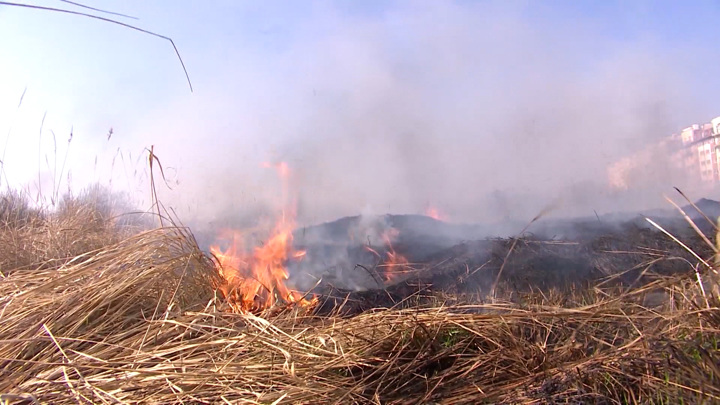Под Зеленоградском задержали подозреваемого в пале сухой травы