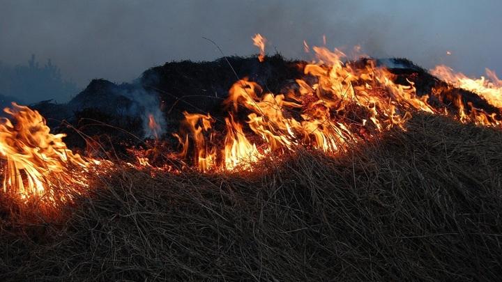 Помидорки отменились: в Кургане сгорело несколько дачных участков