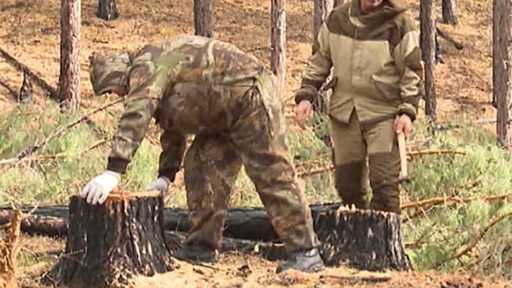 Забайкальским нарушителям лесного законодательства начислено более 2 млн рублей штрафов