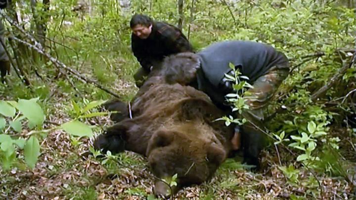 """На территории природного парка """"Ергаки"""" разрешили отстрелить пять медведей"""