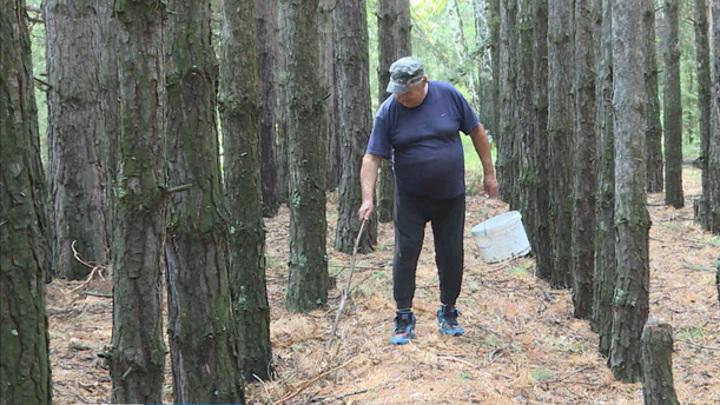 Курганские леса закрыли для посещений