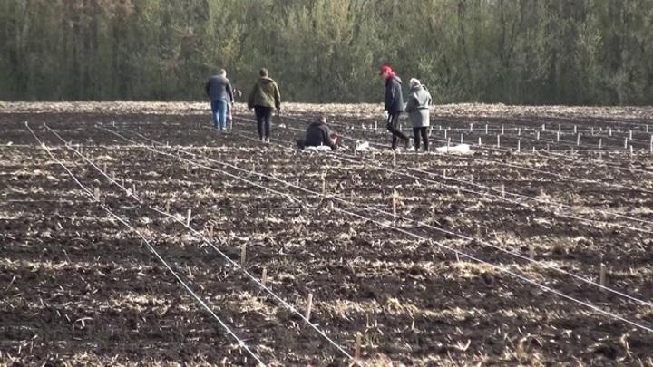 Воронежские и белорусские ученые создадут уникальные сорта сои