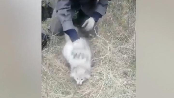 Полицейские спасли двух редких животных, упавших в колодец