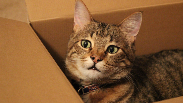 Внимание исследователей привлекла всем известная любовь кошек к коробкам.