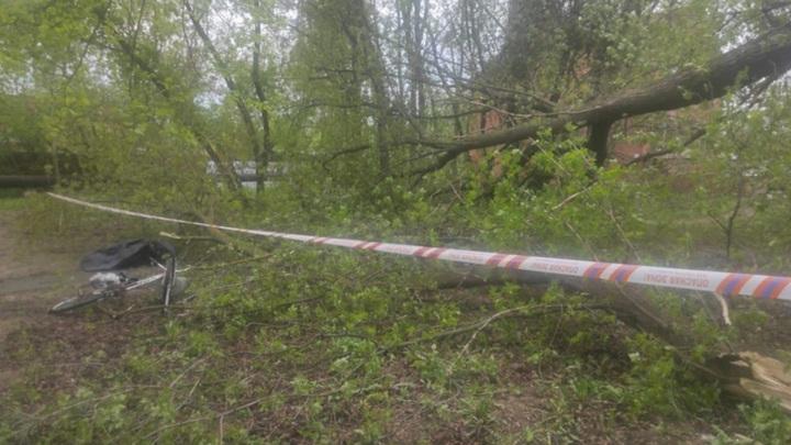 В Подмосковье упавшее дерево убило пенсионерку