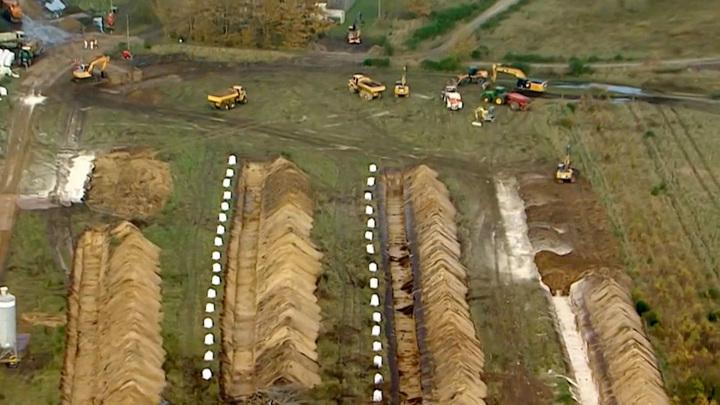 В Дании начали откапывать мертвых норок