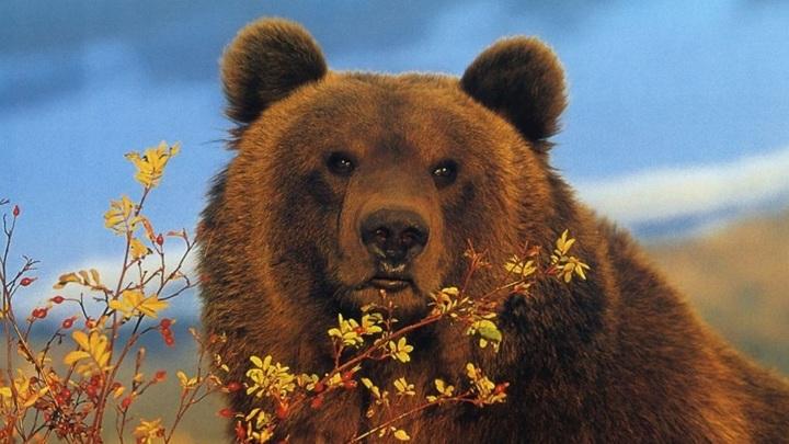 Фото: wildfrontier.ru