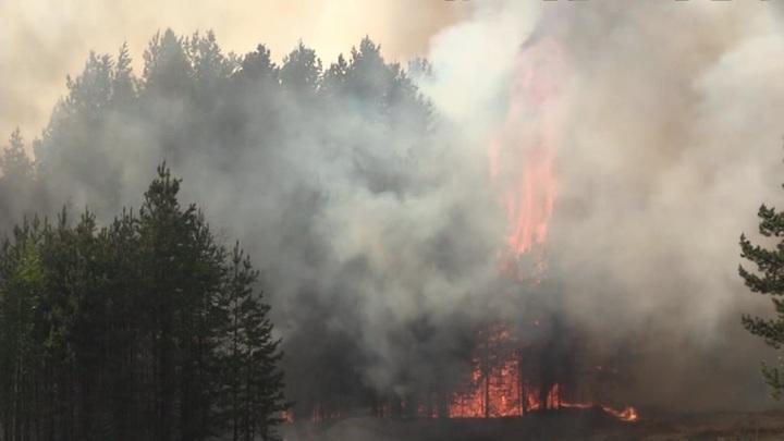 В 56 субъектах РФ объявлен особый режим из-за природных пожаров
