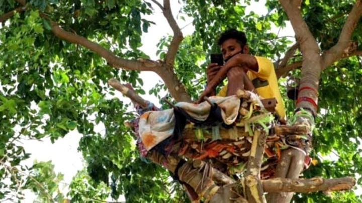 Индийский студент 11 дней провел на дереве во время самоизоляции