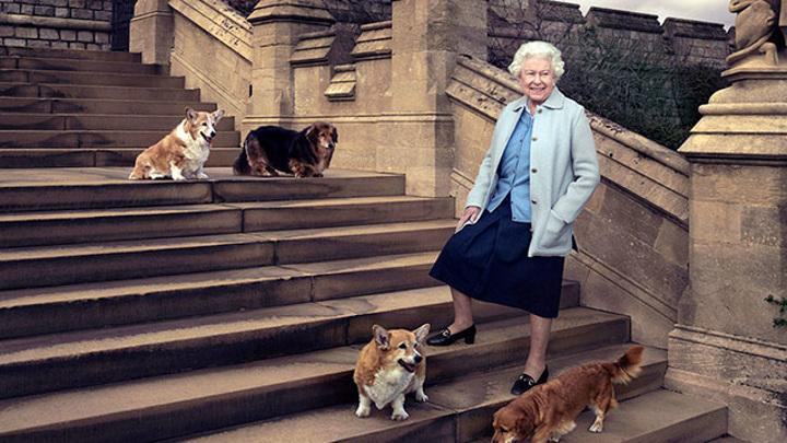 Умер щенок, подаренный Елизавете II во время болезни мужа