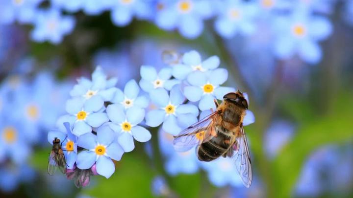 Липецких пчел будут спасать через мессенджеры