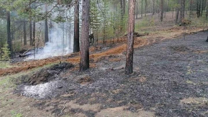 Республиканское агентство лесного хозяйства