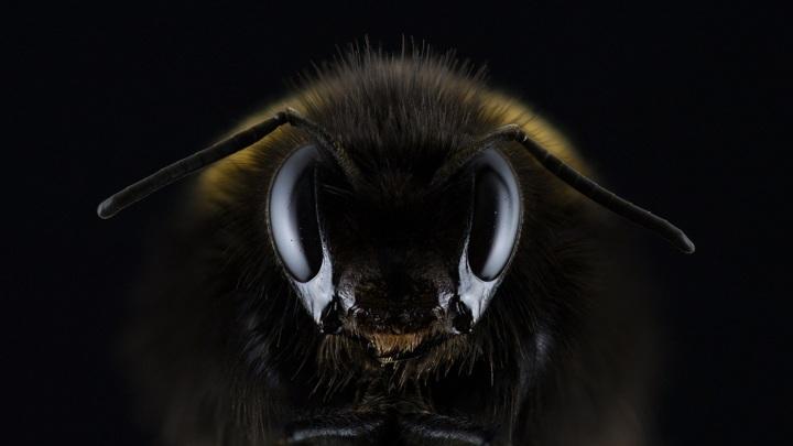Исследовательский спутник с насекомыми запустили самарские школьники