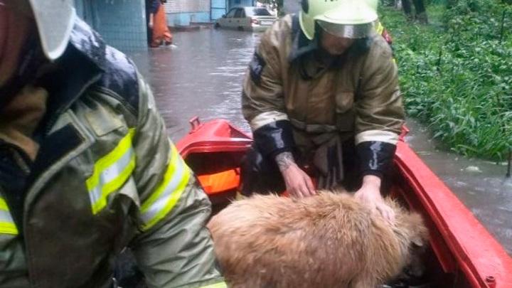 В Ростове пожарные спасли собаку из подвала затопленной дождем 9-этажки
