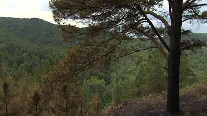 В Мурманской области тушат первый лесной пожар