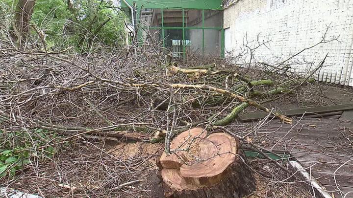 Следователи организовали проверку после падения ветки дерева в Королеве на ребенка