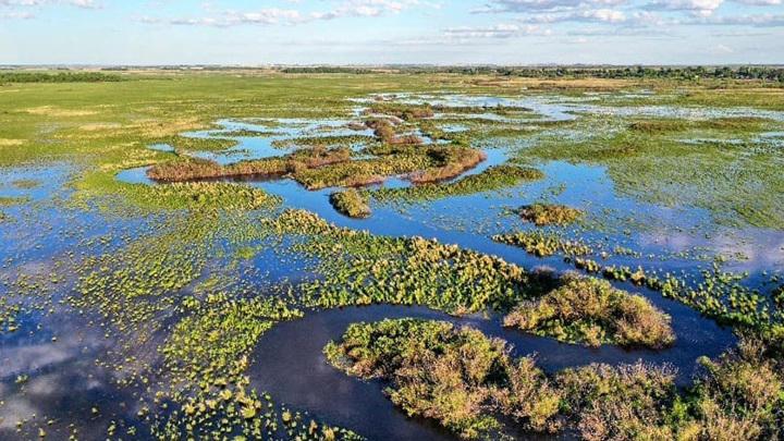 В Приамурье паводки испортили места гнездования краснокнижных журавлей