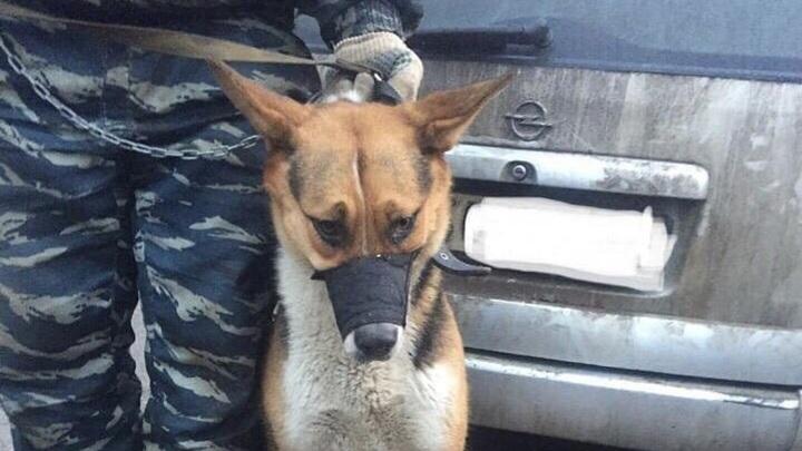 В Иваново прокуратура выявила нарушения в организации отлова бродячих животных