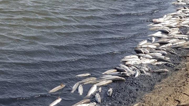 Массовую гибель рыбы зарегистрировали в Смоленской области