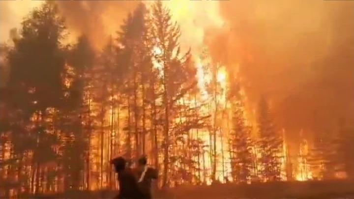 60 лесных пожаров на общей площади более 44 тыс. гектаров зарегистрировано в регионах России