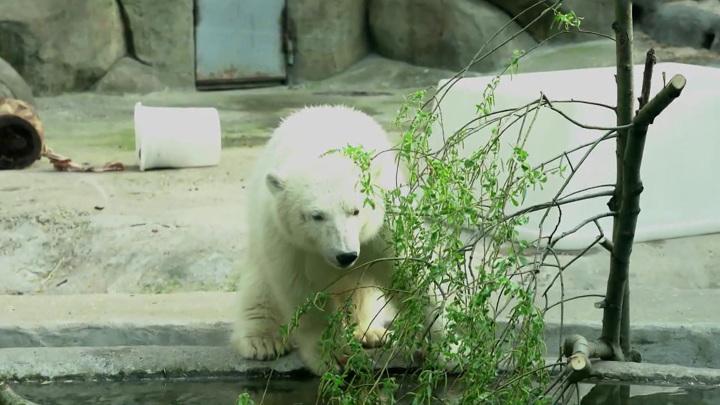 Москвичи выбрали имя для спасенной медведицы