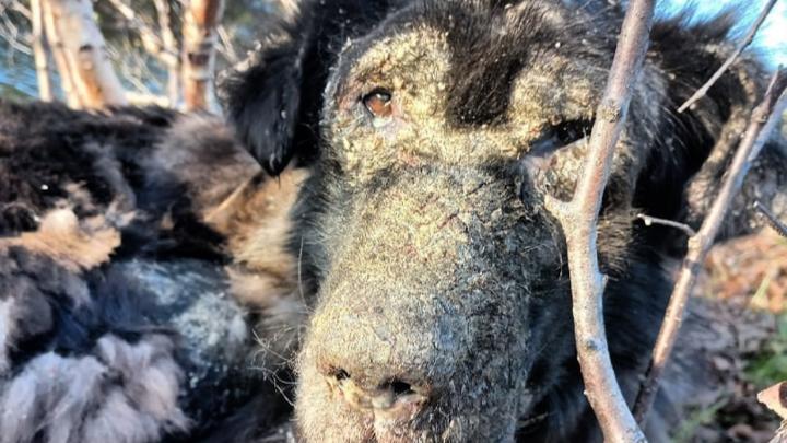 Северяне забрали из леса привязанную к дереву собаку