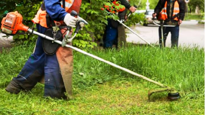 У костромских чиновников возникли претензии к местной траве