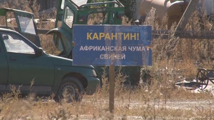 Фермера обвинили в распространении АЧС в Воронежской области