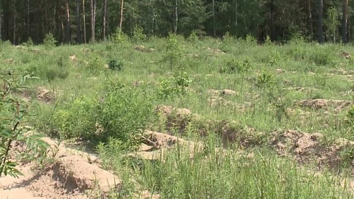 В Рязанской области восстанавливают лес после пожаров