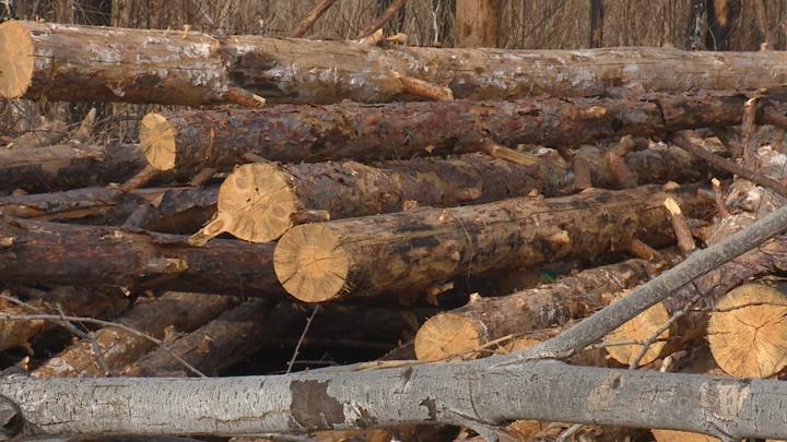 Незаконным сбытчикам древесины вынесли приговор в Иркутске