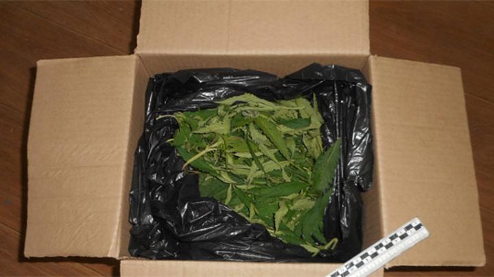 Полкило наркотиков в рюкзаке: в Пензе задержали мужчину