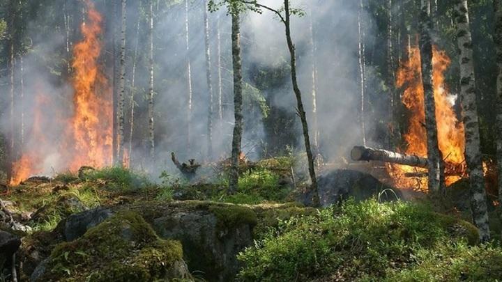 Спасатели локализовали крупный лесной пожар на Ямале