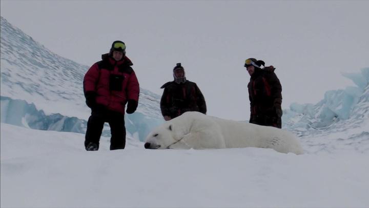 Завершилась экспедиция по изучению популяции белых медведей в Арктике