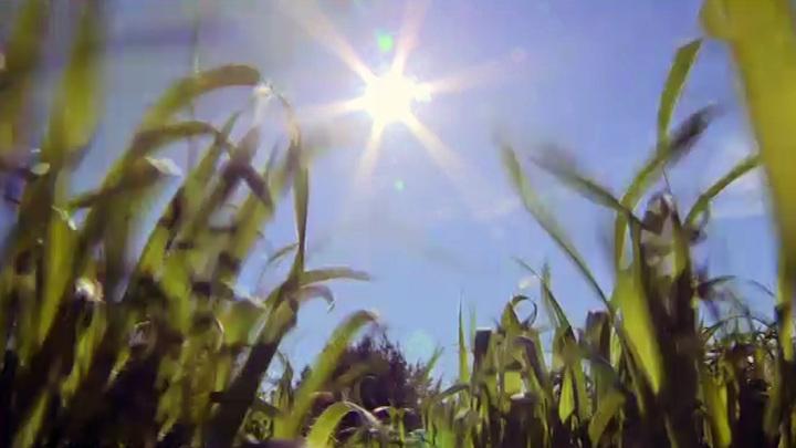 Солнечная и сухая погода установится на юге России на предстоящих выходных