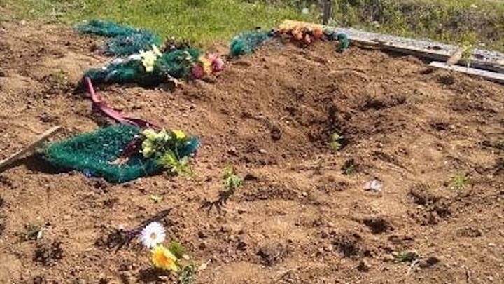 Медведь разрыл 7 могил в Хабаровском крае