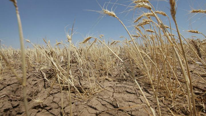 В 18 муниципалитетах Оренбургской области введен режим ЧС из-за засухи