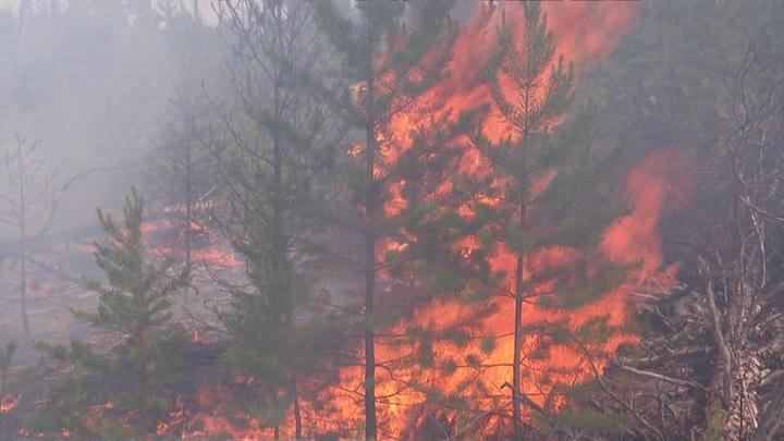 В Иркутской области вызовут искусственные осадки для тушения лесных пожаров